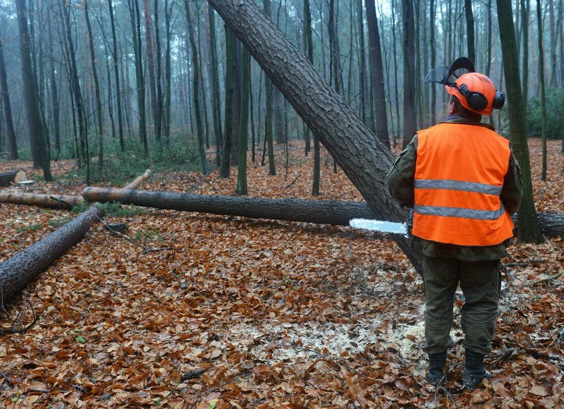 The image shows a man in the forest carrying a chain saw and getting prepared to cut trees