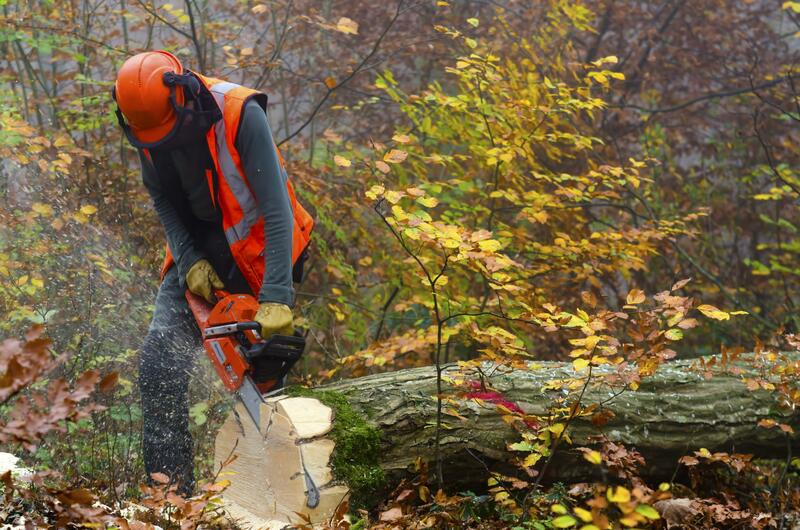 the image shows a man with a chainsaw cutting the trunk of a tree that is lying on the ground.
