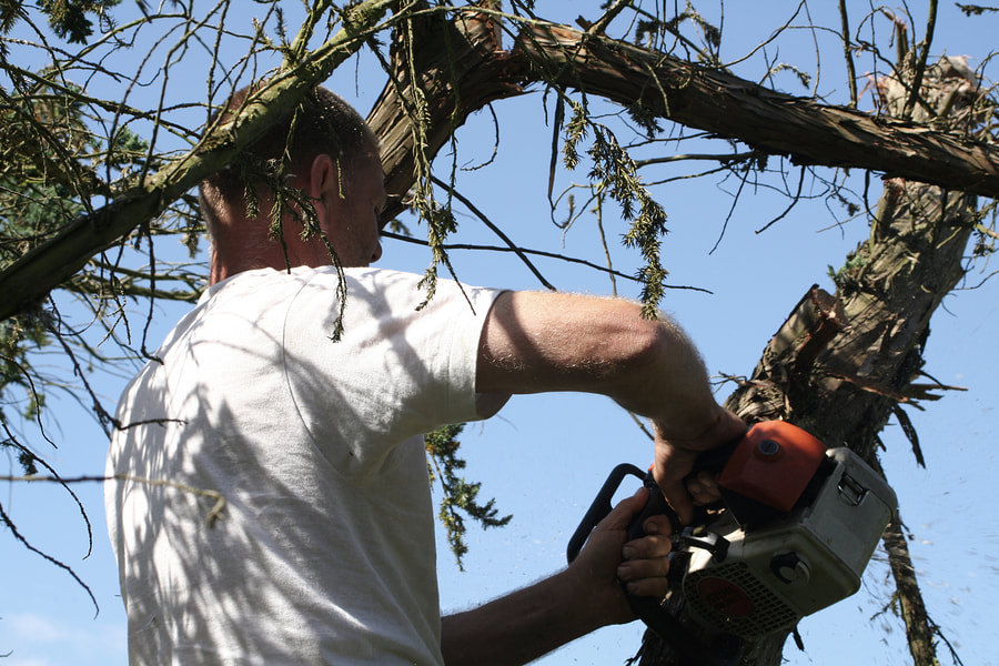 The image shows a man trimming and pruning a tree. He's up in the tree